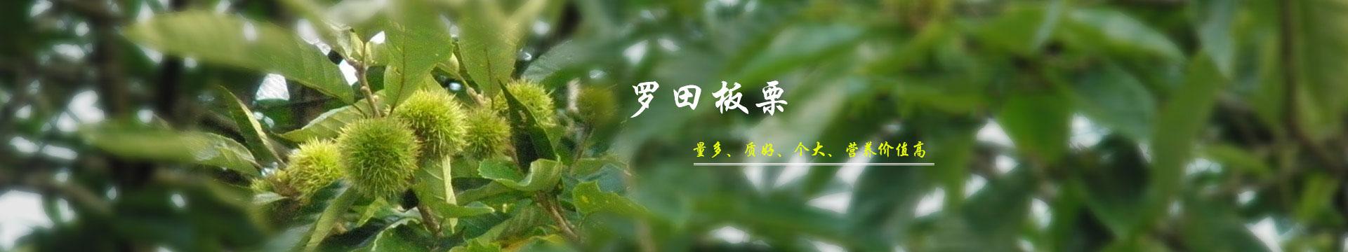 湖北板栗_板栗文化banner